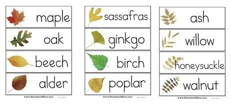 fall leaf preschool printables preschool mom