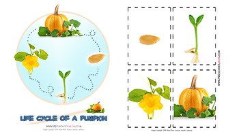 life cycle of a pumpkin chart