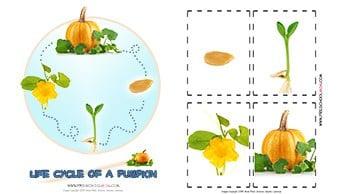 Pumpkin Preschool Printables Life Cycle Of A Pumpkin Chart