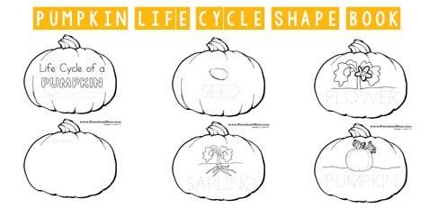 Pumpkin Preschool Printables Life Cycle Of A Pumpkin Book