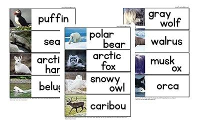 arctic animal preschool printables. Black Bedroom Furniture Sets. Home Design Ideas