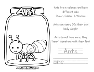 Color & Learn Bug Worksheets - Preschool Mom