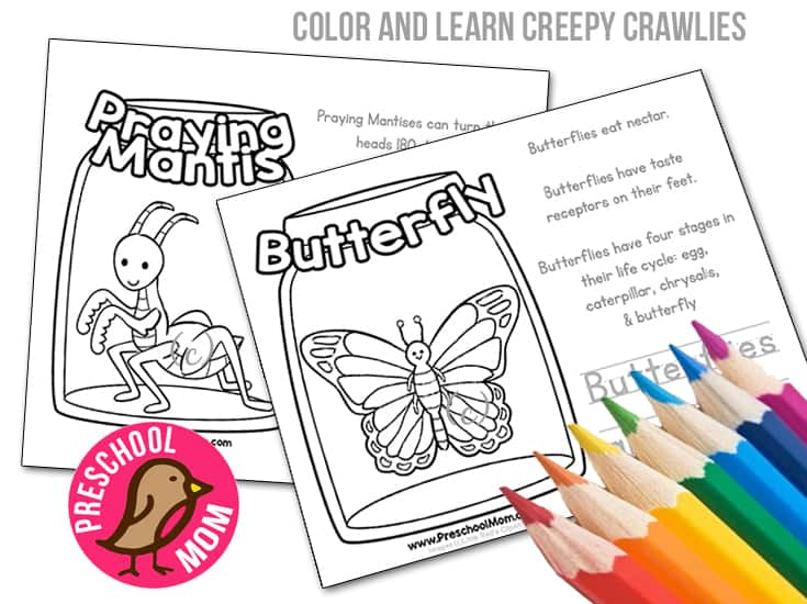 Children Love To Learn About All The Amazing Creepy Crawlies In World Around Them Below Weve Created Ten Different Color And Activity Pages