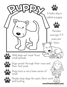 baby puppy color learn - Pictures Farm Animals Color